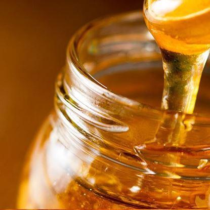 curso bebidas miel